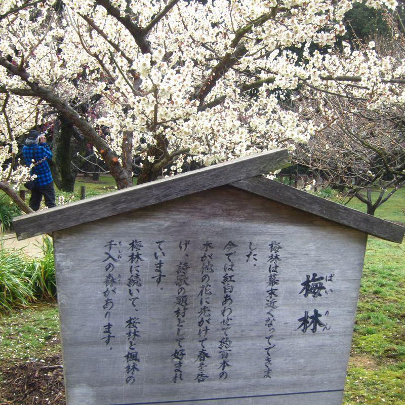 平成24年3月11日岡山・後楽園 024