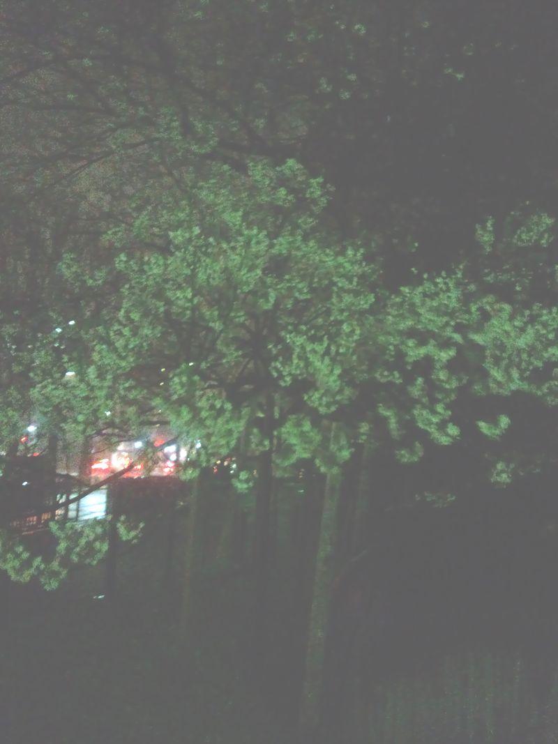 平成24年4月26日石割桜 001